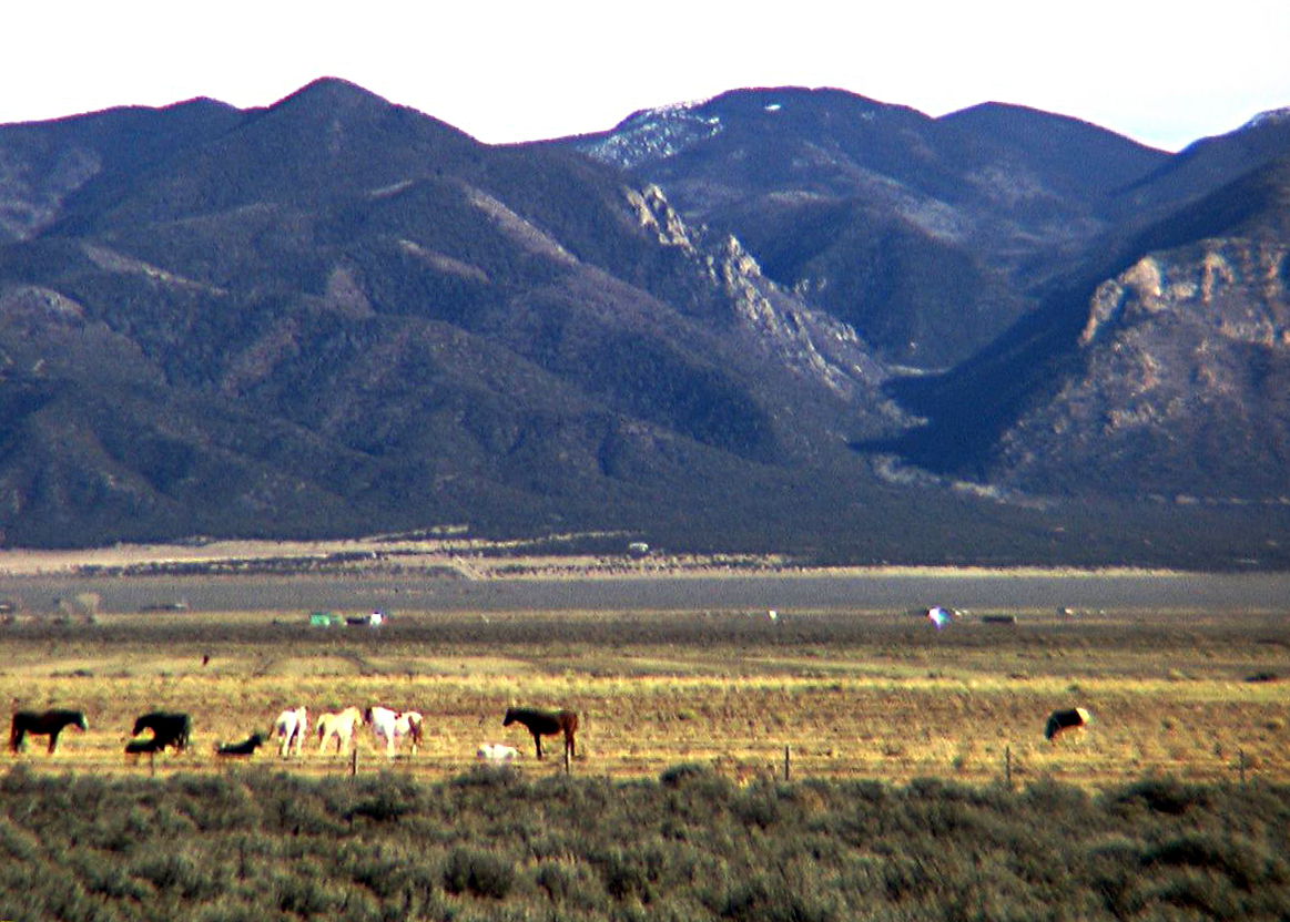 Sunshine Valley, New Mexico. Wild Horses Roam the Mesa!